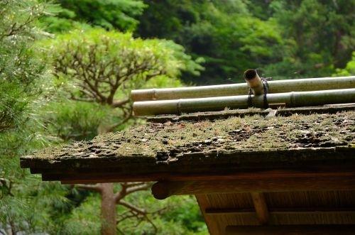 09茶屋s500_DSC_8108_.JPG