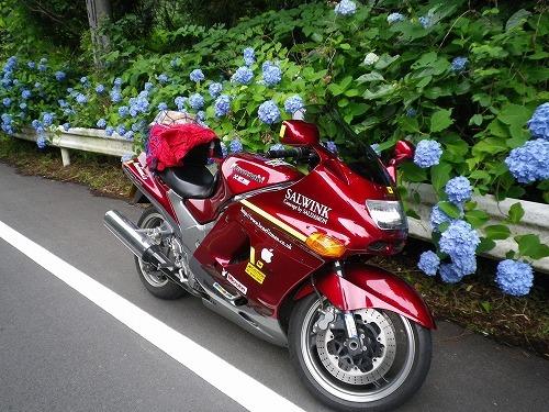 s-IMGP0198紫陽花.jpg